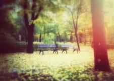 Bancos de madera en parque del otoño foto de archivo