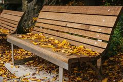 Bancos de madera en un parque con follaje amarillo en otoño Escena del otoño Fotos de archivo libres de regalías