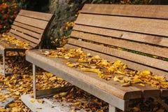 Bancos de madera en un parque con follaje amarillo en otoño Escena del otoño Fotografía de archivo libre de regalías