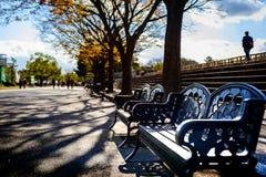 Bancos de parque con adornos de la hoja del Gingko Fotos de archivo