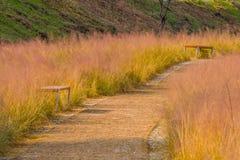 Bancos de parque de madera en hierba alta del invierno Fotografía de archivo