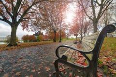 Bancos de parque no parque no outono Imagens de Stock