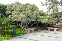 Bancos de piedra en el parque Ramat Hanadiv, jardines conmemorativos de Baron Edmond de Rothschild, Zichron Yaakov, Israel fotos de archivo