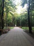 Bancos debajo de los árboles del parque de Stryi en Lviv imagenes de archivo