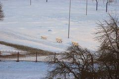 Bancos en la yarda nevada resto en el territorio de la escuela o del sanatorio relájese en el sol del invierno foto de archivo