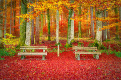 Bancos en una alfombra de las hojas de otoño Imagen de archivo