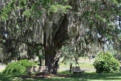 Bancos na máscara das árvores em Texas Brazos State Park foto de stock royalty free