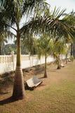 Bancos para el resto debajo de la sombra de palmeras Imágenes de archivo libres de regalías