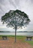 Bancos vacíos y un árbol Fotografía de archivo libre de regalías