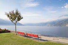 Bancos y árbol en el lago suizo Imágenes de archivo libres de regalías