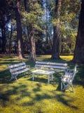 Bancos y soporte blancos de la tabla en el parque en el fondo de árboles grandes fotos de archivo libres de regalías