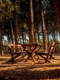 Bancos y tabla en un bosque de los árboles de pino en Toscana Imagen de archivo libre de regalías