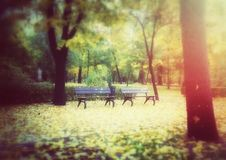Bancs en bois en parc d'automne Photo stock