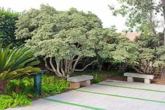 Bancs en pierre en parc Ramat Hanadiv, jardins commémoratifs de Baron Edmond de Rothschild, Zichron Yaakov, Israël photos stock