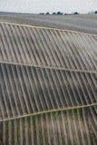 Band av vinrankan på kullen arkivfoton