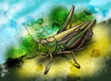 Band-påskyndad gräshoppa Stenobothrus Lineatus - Hand-dragen illustration Arkivbild