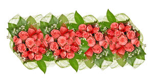Band of pink rose flowers isolated on white Royalty Free Stock Photos