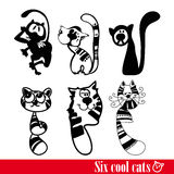 The band of six funkey cats Royalty Free Stock Photos