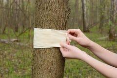 Bandaż zawijający wokoło drzewa Obrazy Stock