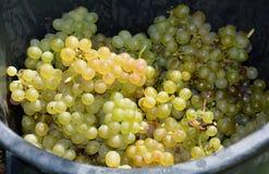 banda ścinku zawierać ścieżka winogron Zdjęcie Royalty Free