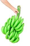 banda bananów występować samodzielnie Zdjęcia Royalty Free