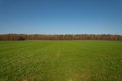 Banda degli alberi sul campo immagini stock libere da diritti