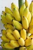 banda dojrzała, banan obraz stock