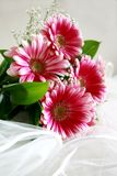 banda kwiaty Obrazy Stock