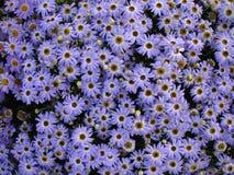 banda kwiaty Obraz Stock