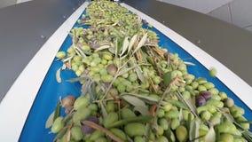 Banda transportadora con las aceitunas maduras en fábrica del aceite de oliva almacen de metraje de vídeo