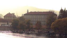 Bandada de los cisnes blancos en las orillas del río de Moldava en la capital de Czechia almacen de metraje de vídeo