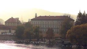 Bandada de los cisnes blancos en las orillas del río de Moldava en la capital de Czechia metrajes
