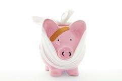 Bandage porcin Image libre de droits