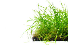 Bande d'herbe Image libre de droits