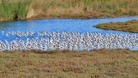Bande d'oiseaux Image stock