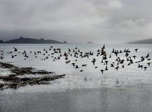 Bande d'oiseaux Photos stock