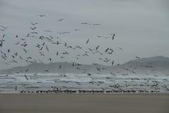 Bande d'oiseaux Photo stock