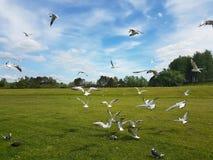 Bande d'oiseaux photographie stock