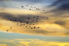 Bande d'oiseaux en vol Photos stock