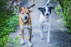Bande de chien Photo libre de droits