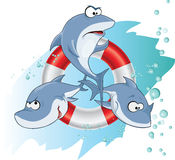 Bande de requin Photos libres de droits