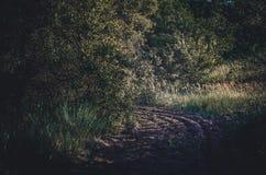 Bande de tampon de séparation du feu dans une réserve nationale Sable de charrue pour une ceinture du feu Forêts protectrices du  images libres de droits