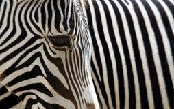 Bande della zebra Fotografie Stock Libere da Diritti