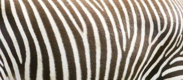 Bande della zebra Immagini Stock Libere da Diritti