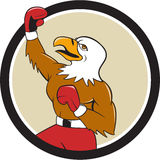 Bande dessinée chauve d'Eagle Boxer Pumping Fist Circle Photographie stock libre de droits