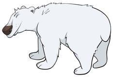 Bande dessinée d'ours blanc Images stock