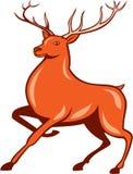 Bande dessinée de marche latérale de cerfs communs rouges de mâle illustration de vecteur