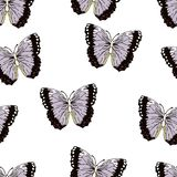 Bande dessinée de papillon dessinant le modèle sans couture, fond de vecteur Insecte dessiné par abstraction avec les ailes noire illustration libre de droits