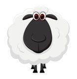 Bande dessinée de moutons Photos stock