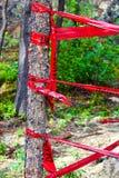 Bande rouge de danger enroulée autour d'un arbre Photo stock